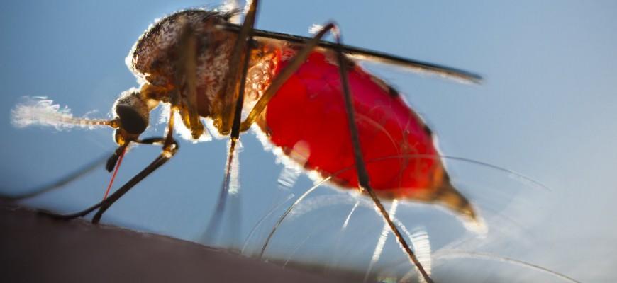 Vírus da zika