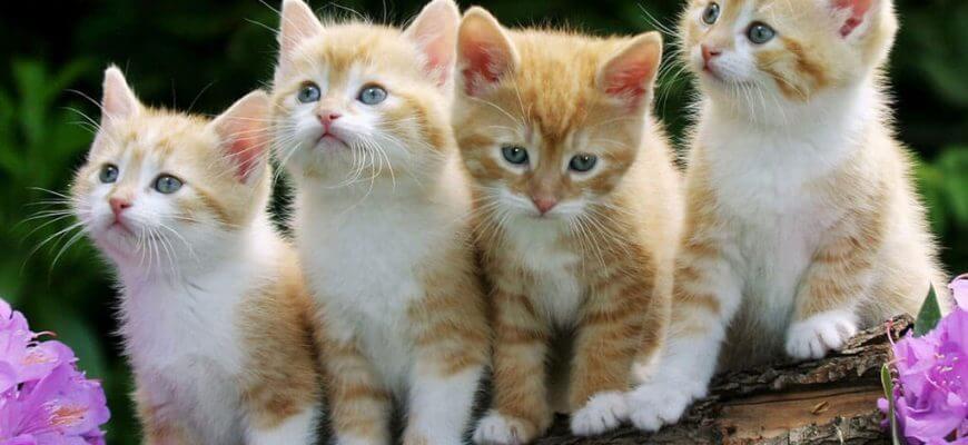 plano de saúde para gatos